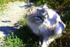 Fluffig katt av kaffefärg royaltyfria foton