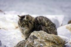Fluffig katt på gatan Fotografering för Bildbyråer