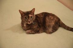 Fluffig katt på sängen royaltyfri bild