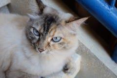 Fluffig katt på stoppen fotografering för bildbyråer