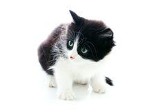 fluffig kattunge Arkivbild