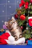 fluffig kattunge Arkivfoton