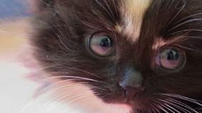 fluffig kattunge little arkivfilmer