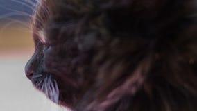 fluffig kattunge little lager videofilmer