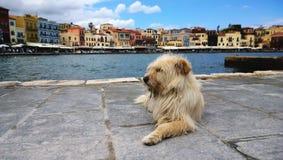 Fluffig lurvig hemlös hund på stranden av Chania Trevliga propra berömda hus i bakgrunden Arkivfoton