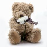 Fluffig nallebjörn på vit bakgrund Arkivfoton