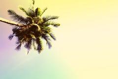 Fluffig palmträdkrona på solig bakgrund för blå himmel Tonat foto för tappning guling Royaltyfria Bilder
