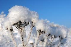 Fluffig snö av morgonen Arkivfoto