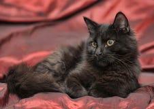 Fluffig svart katt Royaltyfri Foto