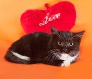 Fluffig svart kattunge som ligger på apelsinen Fotografering för Bildbyråer