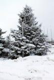 Fluffig åt under snön Bakgrund Växter av iderable Royaltyfria Bilder