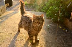 Fluffig utomhus- katt royaltyfri bild