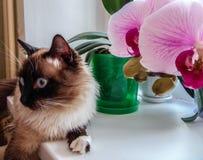 Fluffig vän- och orkidévän fotografering för bildbyråer