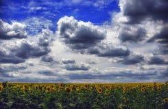 Fluffiga moln i den blåa himlen över fältet av solrosor Royaltyfri Fotografi