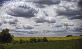 Fluffiga moln i den blåa himlen över fältet av solrosor Royaltyfri Bild