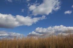 Fluffiga moln på blå himmel med torkat högväxt präriegräs royaltyfri bild
