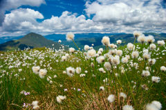 Fluffigt gräs Arkivbild