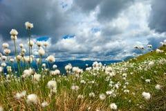 Fluffigt gräs Royaltyfri Bild