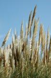 fluffiväxter Arkivfoton