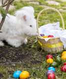 Fluffy angora rabbit eating herbs on grass. Cute fluffy angora bunny rabbit sitting on grass and eating parsley, carrot, selective focus Stock Photo