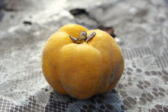Fluffy as velvet. A baked quince, pile, placed on a table Stock Photography