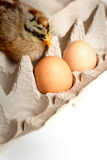Hatched Baby Stock Image