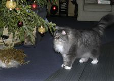 Cat under the Christmas tree waiting for a gift stock images