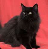 Fluffy black cat Royalty Free Stock Photos