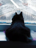 Fluffy black cat watching the snow Royalty Free Stock Photo