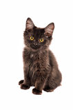 Fluffy Black Kitten Stock Photos