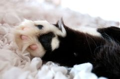 Fluffy black and white cat`s paw on a white cloth royalty free stock image
