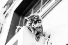 Fluffy Black and White Kitten Cat Portrait