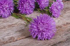 Fluffy blue asters on an old wooden Royalty Free Stock Photos