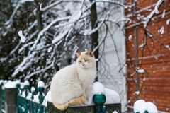 Fluffy blue-eyed cat sitting on fence of brick house on winter day.  Stock Photography