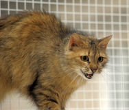Fluffy brown cat Royalty Free Stock Photos
