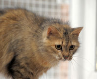 Fluffy brown cat Stock Photo