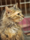 Fluffy brown cat Stock Photography