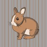 Fluffy brown sitting rabbit Royalty Free Stock Images
