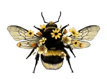 Free Fluffy Bumblebee In Yellow Top View With Wings Royalty Free Stock Image - 150717696
