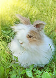 Fluffy Bunny. In the spring meadow Royalty Free Stock Photo
