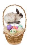 Fluffy bunny with basket of Easter eggs Royalty Free Stock Images