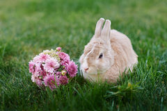 Fluffy bunny and a bouquet of flowers on the grass Stock Photography