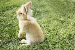 Fluffy bunny. Bunny on a  green grass background Stock Photography