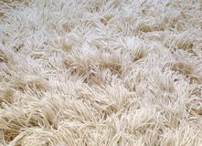 Fluffy carpet Royalty Free Stock Images