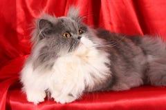 Fluffy cat Royalty Free Stock Photo