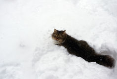 Fluffy cat. In the winter in a snow Stock Photos