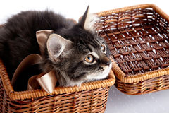 Fluffy cat with a bow in a basket Royalty Free Stock Image