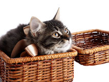 Fluffy cat with a bow in a wattled basket Royalty Free Stock Photography