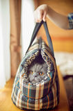 Fluffy cat in carrying Stock Image