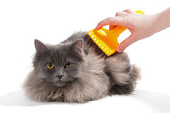 Fluffy cat comb Stock Image